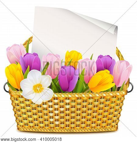Vector Basket With Tulips Isolated On White Background
