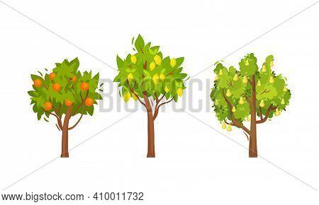 Fruit Trees With Hanging Ripe Orange And Lemon Vector Set