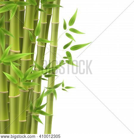 Bamboo Tree Leaf, Plant Stem And Stick. Bamboo Green And Brown Decoration Elements In Realistic Styl