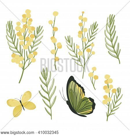 Mimosa Flowers Spring Set. Green And Yellow Color. Vector Illustration.