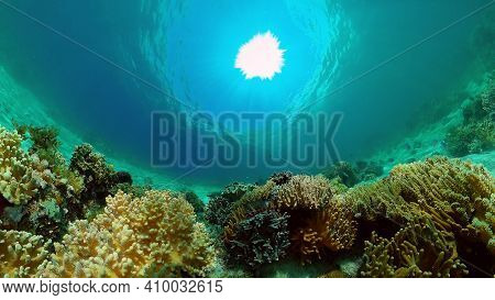 Sea Coral Reef. Underwater Tropical Sea Seascape. Tropical Fish Reef Marine. Philippines.