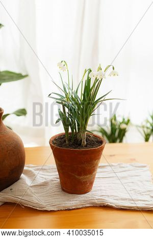 Spring Flowers Growing In Clay Pots On Rustic Wooden Table With Linen Fabric On Background Of Window