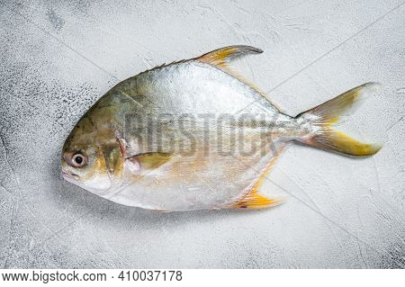 Fresh Raw Fish Pompano On Kitchen Table. White Background. Top View