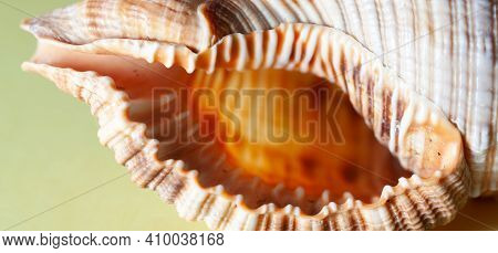 Photo Of A Seashell Close-up On A Yellow Background