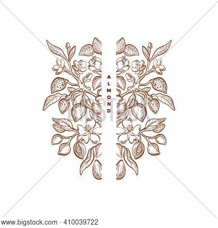 Almond Nuts Ornament. Graphic Vintage Frame. Floral Victorian Symbol. Vector Nature Plant, Sketch Le