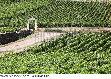 Landscape With Chassagne Montrachet Vineyards In Burgundy, France