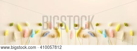 Colored Dry Lagurus Stems On A Soft Beige Background. Long Wide Panoramic. Concept Of Holiday, Birth