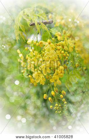 Flowering Tree.light Vignette
