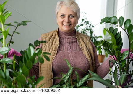 Senior Woman With Green Plants And Flowers At Home. Woman Caring For House Plant. Woman Taking Care
