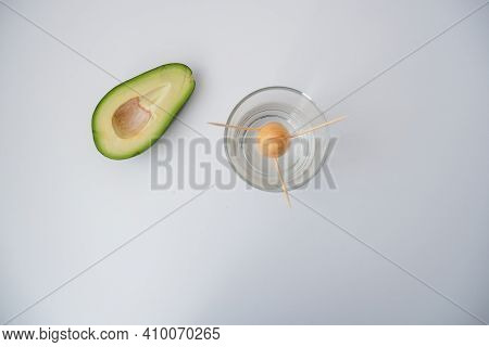 In The Photo, An Avocado, A Glass Of Water With An Avocado Stone On A White Background. The Process