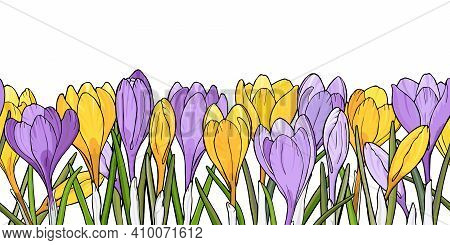 Border With Crocuses Flowers. Hand Drawn Floral Banner. Vector Illustration On White Background. Sea