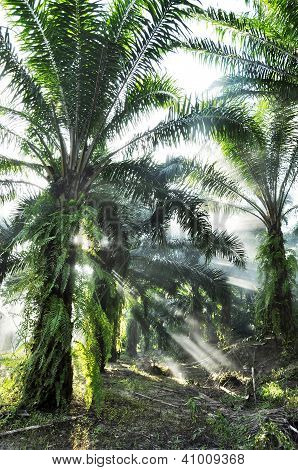Palm Light Fog Farm Day Outdoor