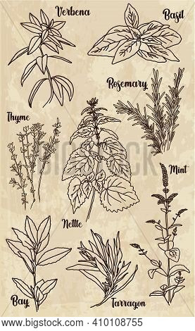A Group Of Spices, Herbs And Spices. Retro Illustration In The Style Of Engraving.  On A Light Backg