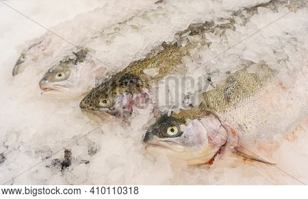 Rainbow Trout Fish On Ice At The Fish Market