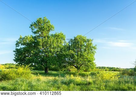 Summer Nature Landscape With Green Tree On Fresh Grassy Meadow On Clear Day. Scenery Nature. Amazing