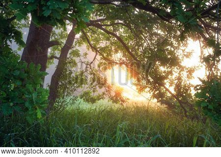 Summer Scene In The Morning Sunlight. Amazing Green Tree And Sun Rays Through Branches. Fresh Wild N