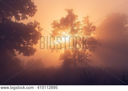 Foggy Nature Landscape With Sunrays Through Trees. Vivid Sunbeams On Misty Morning Meadow With Trees