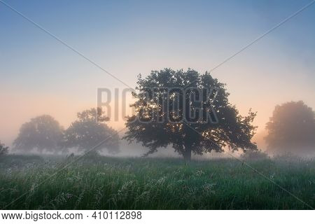 Wild Spring Morning Misty Nature At Sunrise. Green Grass And Trees In Fog. Colorful Dawn Sky Over Th