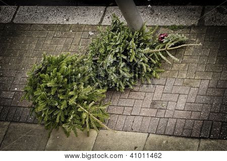 Two Christmas trees on the pavement waiting to be collected by the garbage collectors