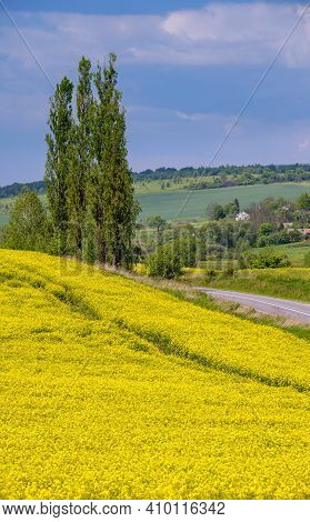 Road Through Spring Rapeseed Yellow Blooming Fields View, Blue Sky With Clouds In Sunlight. Natural
