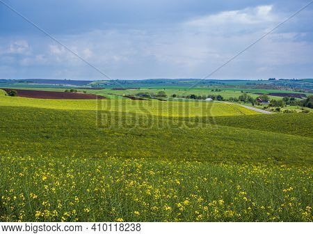 Spring Evening View With Rapeseed Yellow Blooming Fields In Sunlight With Cloud Shadows. Natural Sea