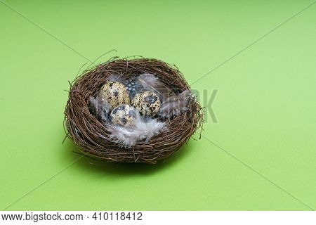 Nest With Egg And Feather On A Green Background