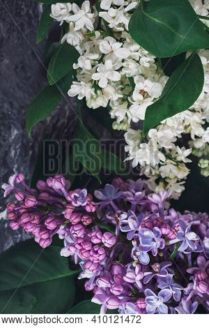 Texture Background With Bright Flowers Of Lilac For The Cover Of The Notebook Diary Or Congratulatio