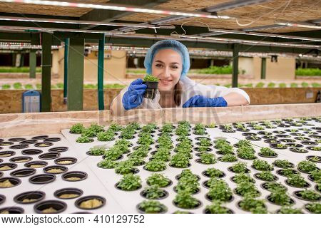 Young Woman Farmer Scientist Analyzes And Studies Research On Organic, Hydroponic Vegetable Plots -
