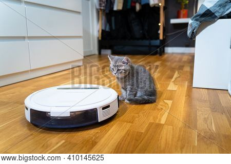Cleaning Theme, Smart Technology And Pets. Automatic Robot Vacuum Cleaner Cleans The Room, While Gra