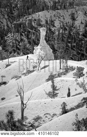 Bryce Canyon, Ut - May 26, 2012. Bryce Canyon Monochrome Landscape, Man Hiking On A Trail In Bryce C