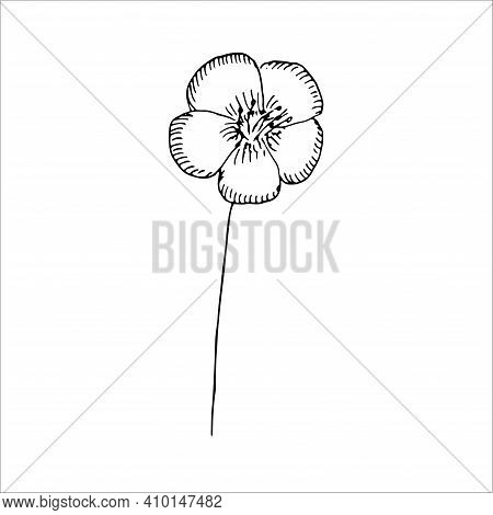 Flax Flower Vector Illustration Hand Drawing Outline Sketch
