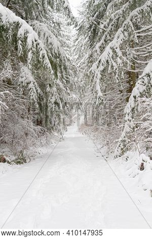 A Snow Covered Trail Through A Winter Wonderland Forest With Heave Snow.