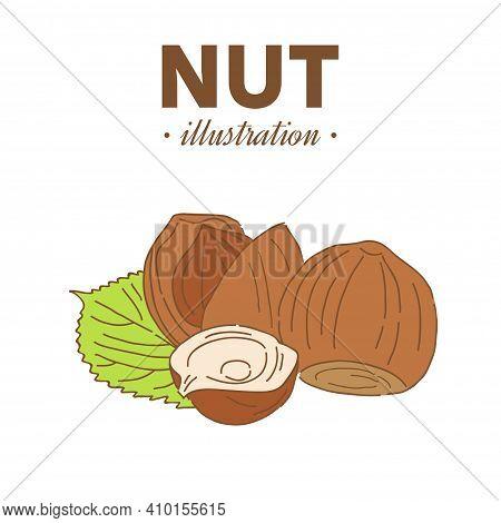 Hand Drawn Sketch Style Hazelnut In Color. Single, Group Seeds, Hazelnut In Nutshells Group. Organic