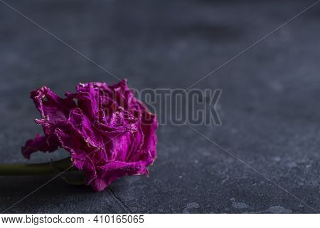 Single Withered Dried Roses On Dark Background In Vintage Rustic Style. Concept Of Broken Heart, Fai