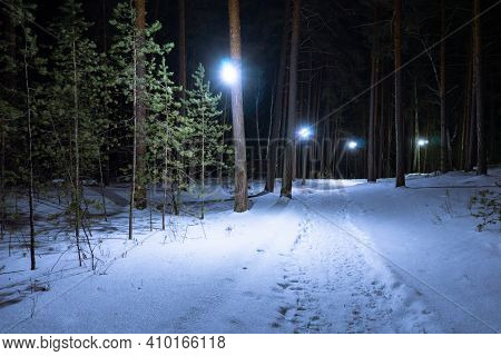 Illuminated Path In A Winter Park At Night. A Footpath In The Snow In The Middle Of A Coniferous For