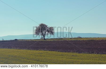 The Only Tree In The Field. Lonely Tree In The Field. Under The Blue Sky, The Only Tree In The Field