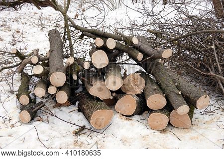 Many Sawed Tree Trunks And Branches Stacked In A Pile In The Forest On A Winter Day Front View Close