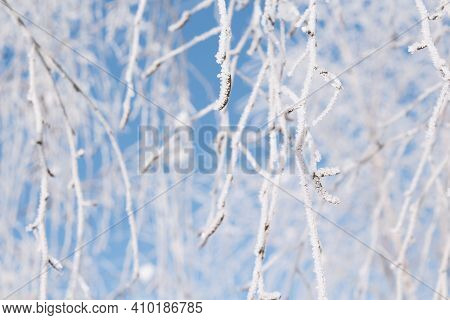 Close Up Amazing Tree Branches Covered In Snow With Severe Frost. Blue Winter Sky. Winter Seasonal L