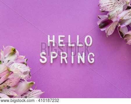 Text Hello Spring On Bright Purple Background With Border Of Fresh Alstroemeria Flowers. Seasons Gre