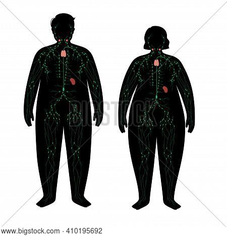 Lymphatic System Concept. Ducts In Overweight Human Silhouette. Lymph Nodes Concept. Tonsil, Thymus,