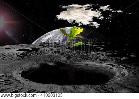 Colonization Of The Moon, Attempts To Grow Trees On The Lunar Surface. Sci-fi Collage, Elements Of T