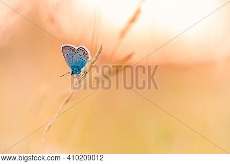 Fresh Spring Nature Closeup, Sunset Sunrise Landscape With Wonderful Butterfly On Soft Colored Backg