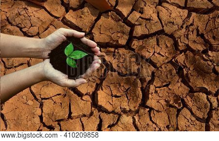 Top View Hands Holding Tree Growing On Cracked Earth. Saving Environment And Natural Conservation Co