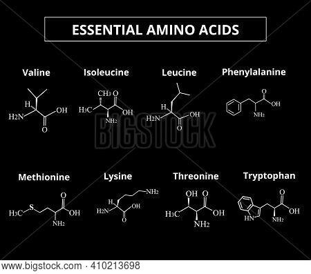 Essential Amino Acids. A Set Of Amino Acids. Chemical Molecular Formulas Of Amino Acids. Vector Illu
