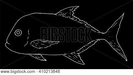 Illustration On Deep White Background.vector Sea Fish Giant Caranx Black Outline On White Background
