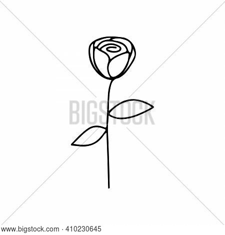 Vector Line Art Drawing Of A Rose. Isolated Sketch Of Rose Flower On White Background. Draw The Desi
