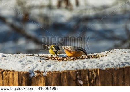 Nuthatch Woodpecker Tit And Blue Tit Birds In Winter In Sunshine. Focus On Blue Tit In The Backgroun