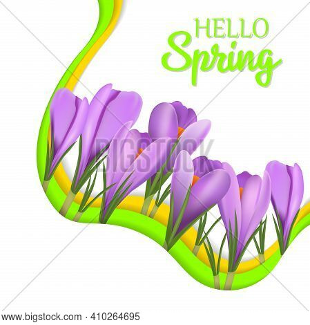 Hello Spring. Spring Banner With Colorful Crocus Flowers And Isolated Font. Spring Greeting Card. A