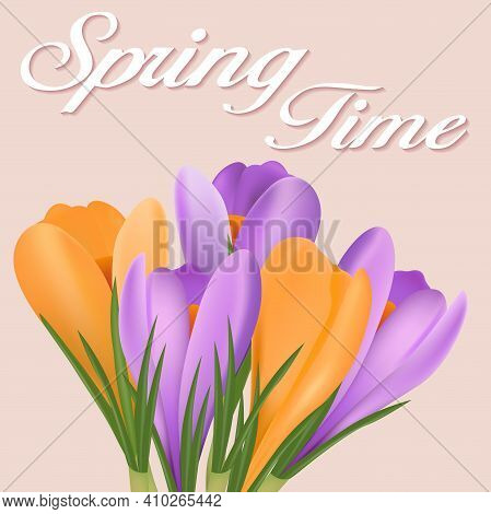 Springtime Poster With A Bouquet Of Purple And Yellow Crocuses.vector Design Of A Spring Flower Bouq