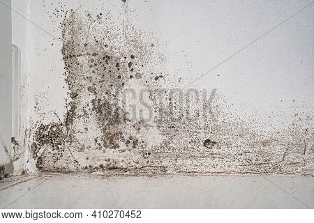 White Wall With Black Mold. Dangerous Fungus For Human Health